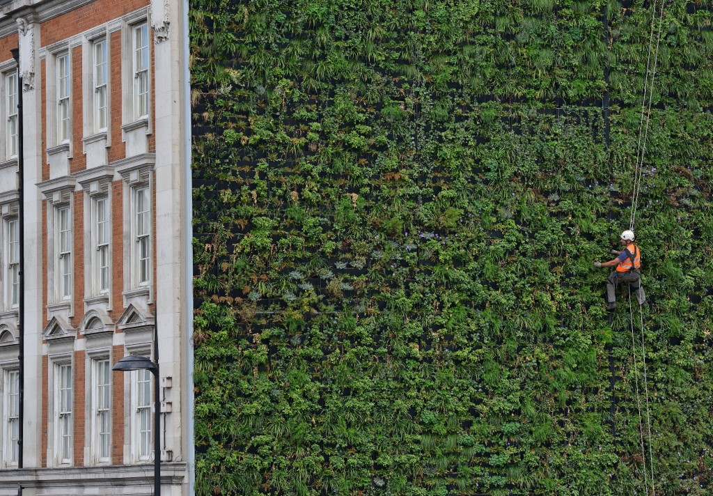 london living wall